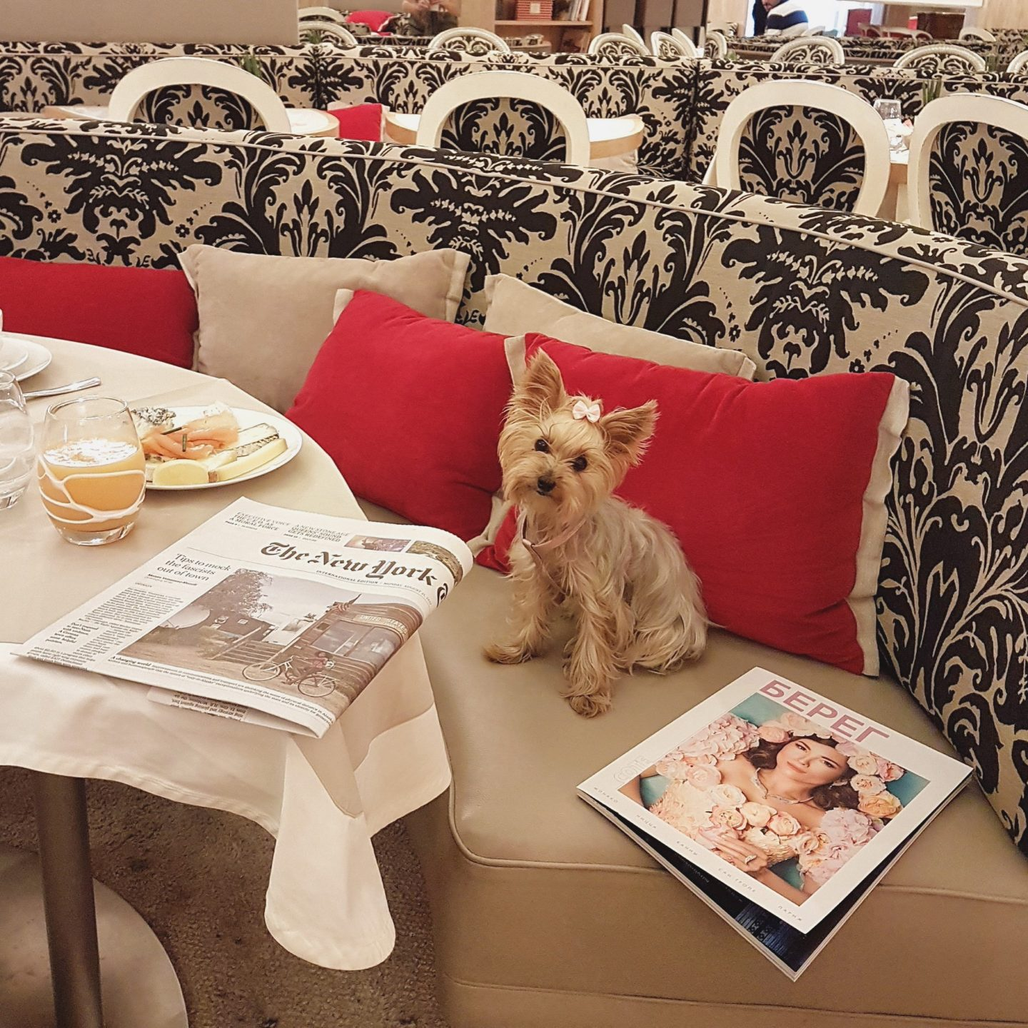 hoteles pet friendly paris