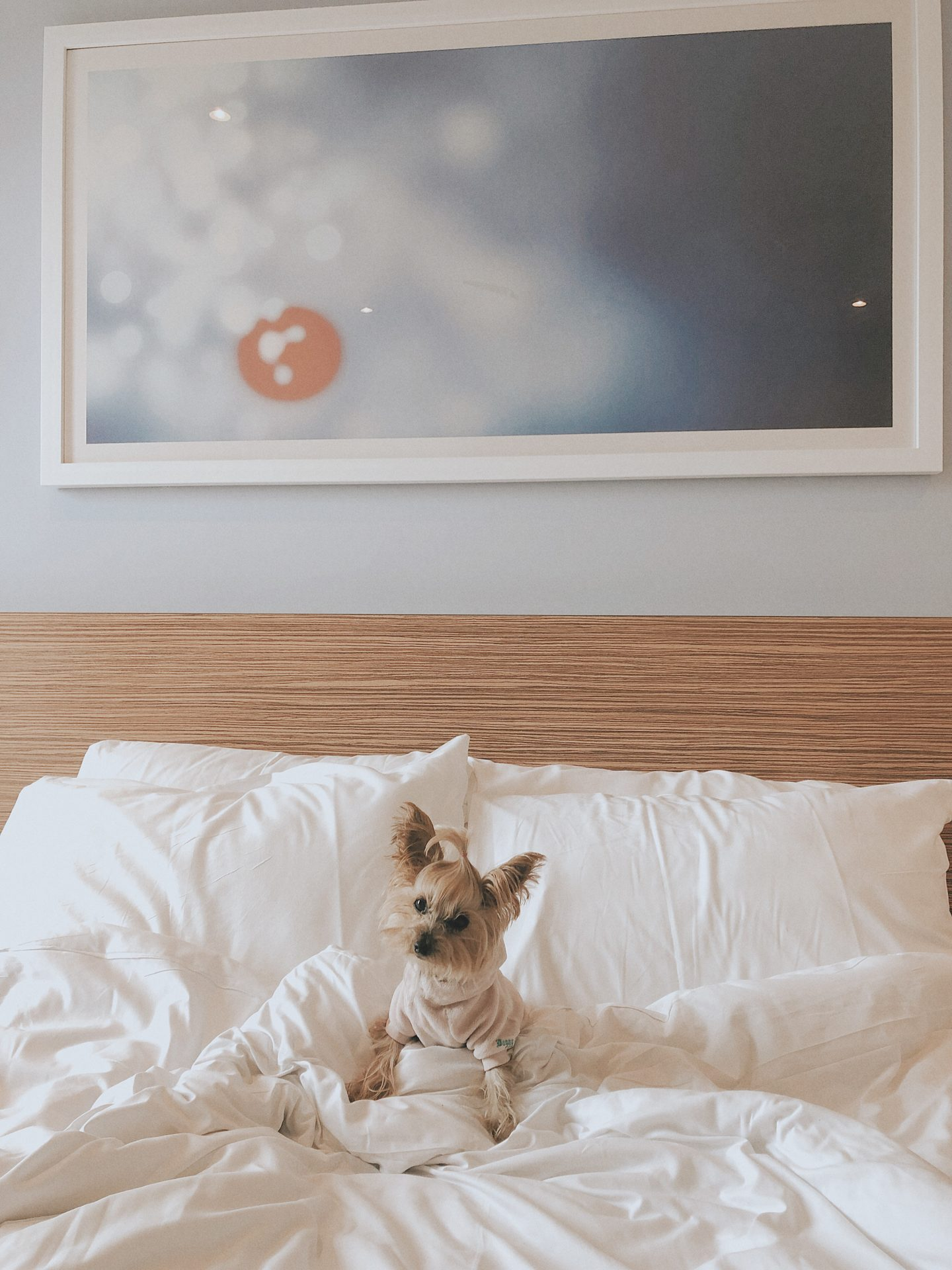 travelodge pet friendly uk
